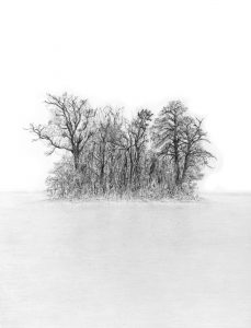 Stephen Walter | Coppice | 2011 | Graphite on paper | 41.8×29.5cm
