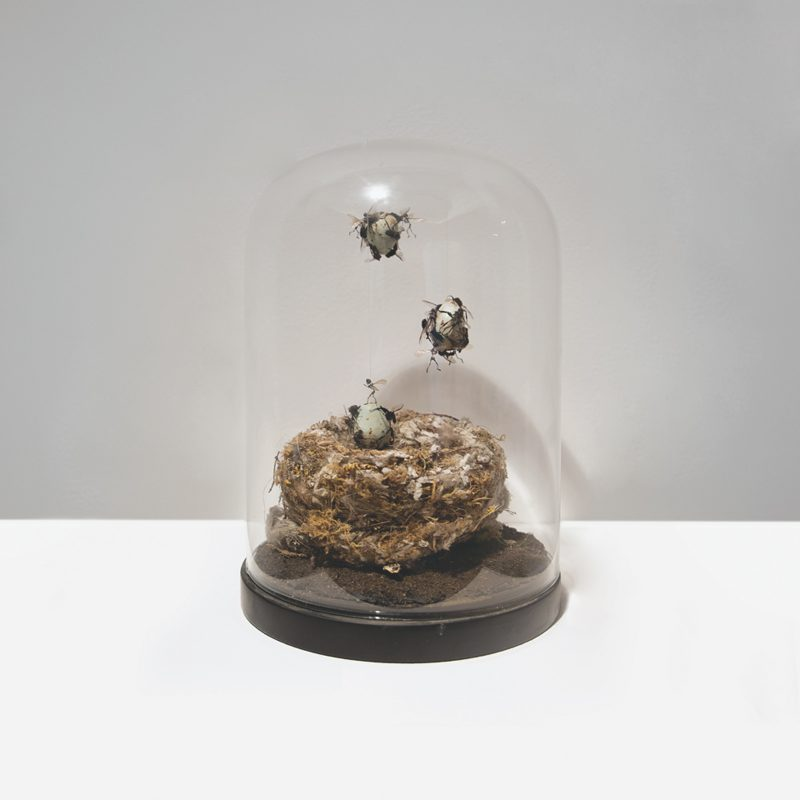 Tessa Farmer | The Raid | 2018 | Bird's nest, insects, polymer clay, plant roots | 15 (d) x 21 (h) cm
