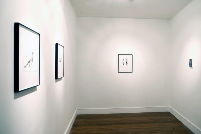 Bleeding for the light | CHARLIE SMITH LONDON | Installation View (8)