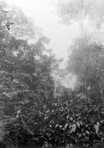 Eric Manigaud   Jungle # 3 La Forêt près de Zaranou   2008   Pencil & graphite powder on paper   179x127cm