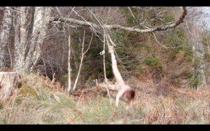 Hilde Huse Krohn | Hanging in the Woods | 2014 | Digital video | (11 mins 33 secs) Dimensions variable